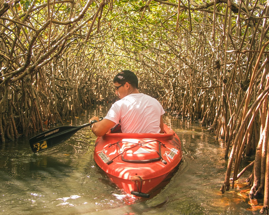backpacking belize, man canoeing through trees in the river